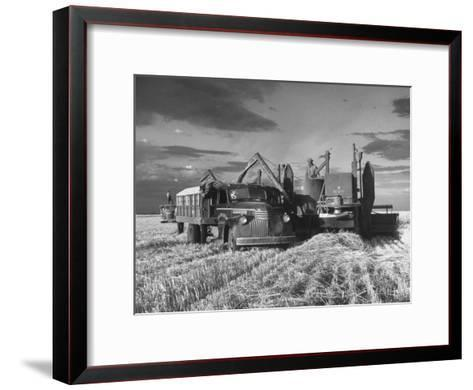 Combines and Crews Harvesting Wheat, Loading into Trucks to Transport to Storage-Joe Scherschel-Framed Art Print
