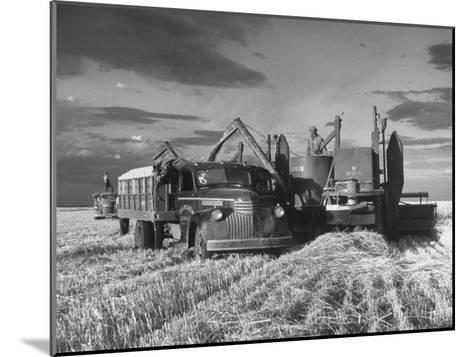 Combines and Crews Harvesting Wheat, Loading into Trucks to Transport to Storage-Joe Scherschel-Mounted Photographic Print