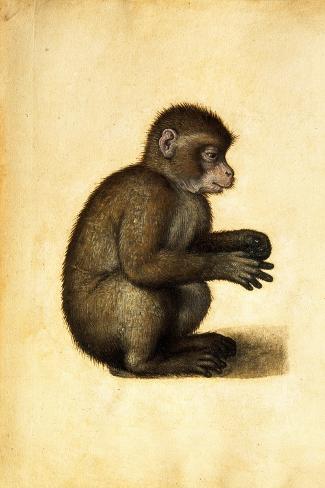A Monkey-Albrecht D?rer-Stretched Canvas Print