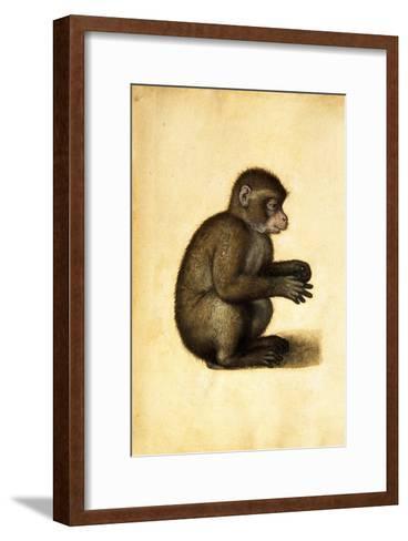 A Monkey-Albrecht D?rer-Framed Art Print