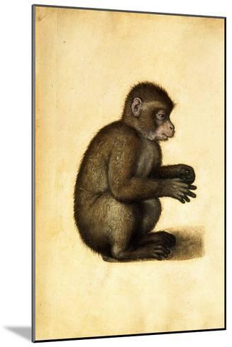 A Monkey-Albrecht D?rer-Mounted Giclee Print