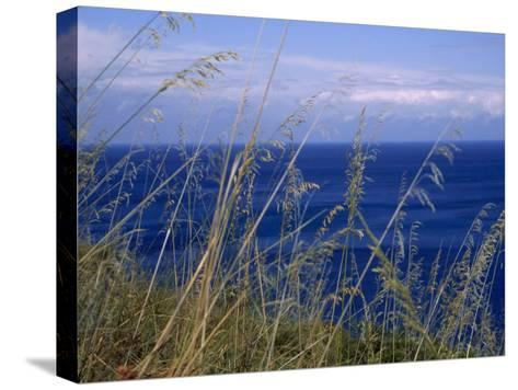 View of the Sea Through Grasses Atop a Hill-Marcia Kebbon-Stretched Canvas Print