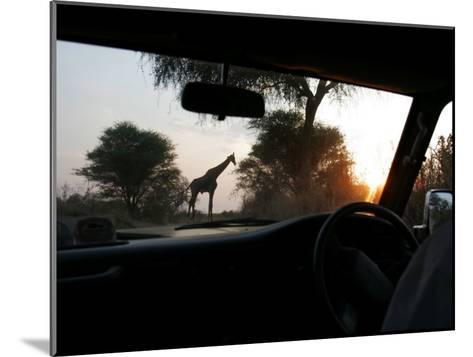 Silhouette of a Giraffe in the Tarangire National Park, Tarangire National Park, Tanzania, Africa-Gina Martin-Mounted Photographic Print