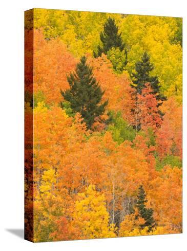 Leaves of a Forest Change Colors in Autumn, Santa Fe, New Mexico, USA-Ralph Lee Hopkins-Stretched Canvas Print