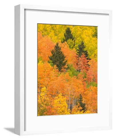 Leaves of a Forest Change Colors in Autumn, Santa Fe, New Mexico, USA-Ralph Lee Hopkins-Framed Art Print