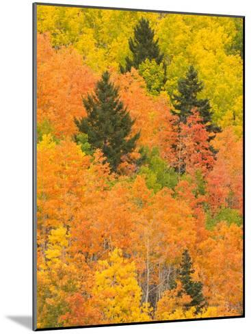 Leaves of a Forest Change Colors in Autumn, Santa Fe, New Mexico, USA-Ralph Lee Hopkins-Mounted Photographic Print