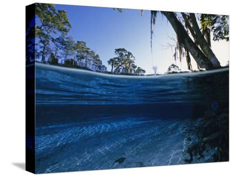 Clear Water of Manatee Springs, with Spanish Moss Draped Trees, Manatee Springs, Florida-Paul Sutherland-Stretched Canvas Print