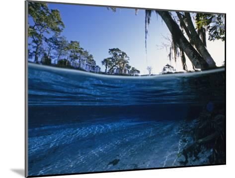 Clear Water of Manatee Springs, with Spanish Moss Draped Trees, Manatee Springs, Florida-Paul Sutherland-Mounted Photographic Print
