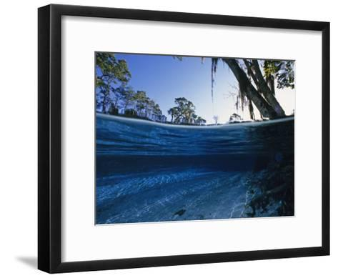 Clear Water of Manatee Springs, with Spanish Moss Draped Trees, Manatee Springs, Florida-Paul Sutherland-Framed Art Print