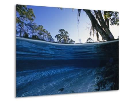 Clear Water of Manatee Springs, with Spanish Moss Draped Trees, Manatee Springs, Florida-Paul Sutherland-Metal Print