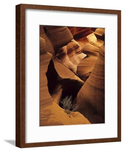 Eroded Sandstone and a Tumbleweed Branch in a Slot Canyon-Ralph Lee Hopkins-Framed Art Print