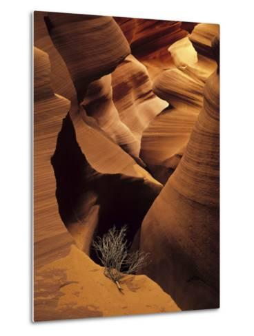 Eroded Sandstone and a Tumbleweed Branch in a Slot Canyon-Ralph Lee Hopkins-Metal Print