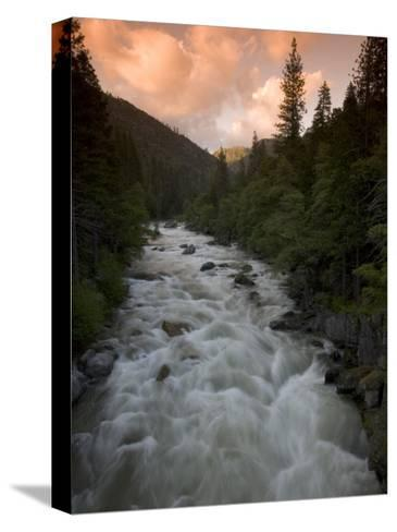 Late Afternoon on the Middle Fork of the Stanislaus River-Phil Schermeister-Stretched Canvas Print