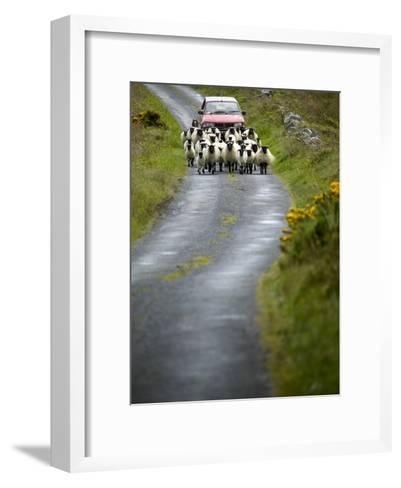 In Irish Shepherd Herds His Flock of Sheep, Clare Island, County Mayo, Ireland-Pete Ryan-Framed Art Print