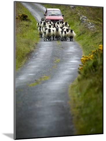 In Irish Shepherd Herds His Flock of Sheep, Clare Island, County Mayo, Ireland-Pete Ryan-Mounted Photographic Print