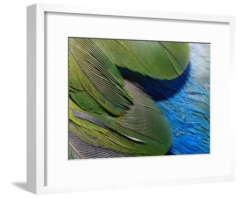 Detailed View of the Texture of the Feathers of a Red-Winged Parrot-Jason Edwards-Framed Art Print