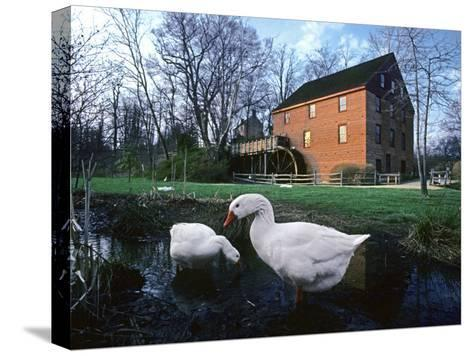 Geese Wading in Front of Colvin Run Mill, Colvin Run Mill, Great Falls, Virginia-Annie Griffiths Belt-Stretched Canvas Print
