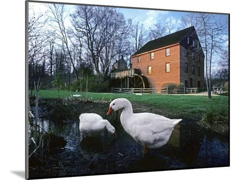 Geese Wading in Front of Colvin Run Mill, Colvin Run Mill, Great Falls, Virginia-Annie Griffiths Belt-Mounted Photographic Print