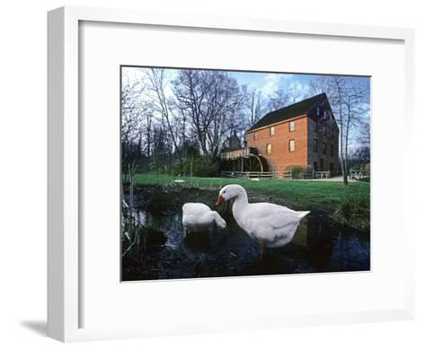 Geese Wading in Front of Colvin Run Mill, Colvin Run Mill, Great Falls, Virginia-Annie Griffiths Belt-Framed Art Print