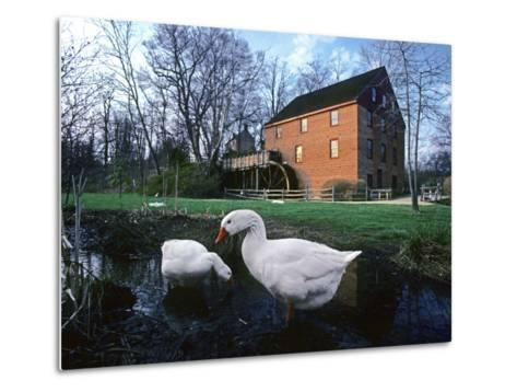 Geese Wading in Front of Colvin Run Mill, Colvin Run Mill, Great Falls, Virginia-Annie Griffiths Belt-Metal Print
