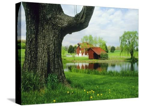 Tree Frames a View of a Farm Reflected in a Pond, Virginia-Annie Griffiths Belt-Stretched Canvas Print