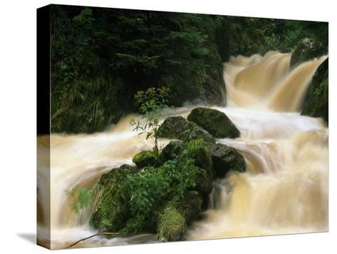 Ravenna Creek Rushing in Small Waterfalls over Mossy Rocks-Norbert Rosing-Stretched Canvas Print
