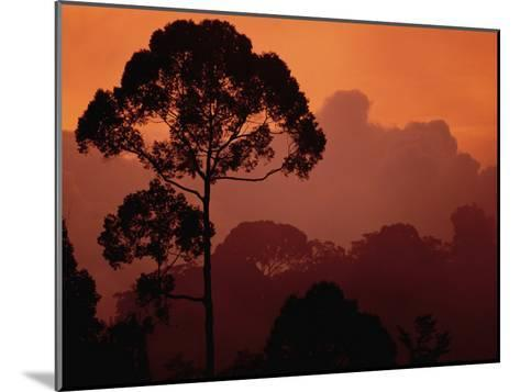 Sunset View of Shorea Trapezifolia, a Critically Endangered Tree Species-Darlyne A^ Murawski-Mounted Photographic Print