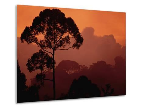 Sunset View of Shorea Trapezifolia, a Critically Endangered Tree Species-Darlyne A^ Murawski-Metal Print