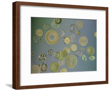 Close View of Diatoms, USA-Darlyne A^ Murawski-Framed Art Print