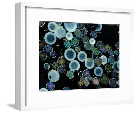 Microscopic View of Diatoms-Darlyne A^ Murawski-Framed Art Print