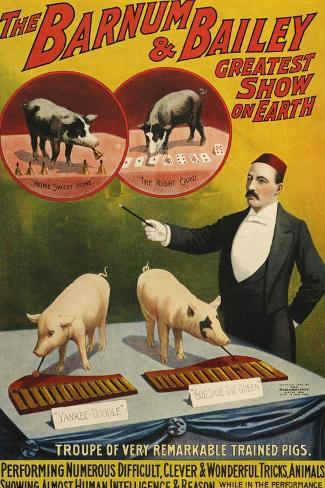 Barnum and Bailey, Poster, 1900--Stretched Canvas Print