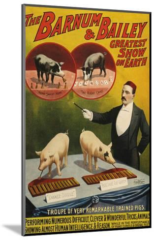 Barnum and Bailey, Poster, 1900--Mounted Giclee Print