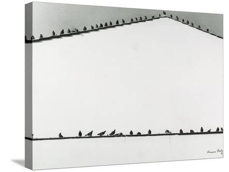 Pigeons-Vincenzo Balocchi-Stretched Canvas Print