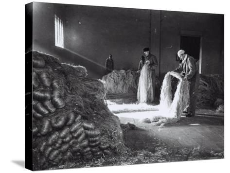 Inside a Factory, a Few Workers Arrange the Raw Hemp Fibers in Bunches-A^ Villani-Stretched Canvas Print
