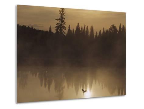 A Bird Flies Low over Fog-Shrouded Lake Superior-Medford Taylor-Metal Print