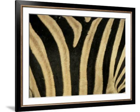 Close-Up of Zebra Skin, South Africa, Africa-Steve & Ann Toon-Framed Art Print