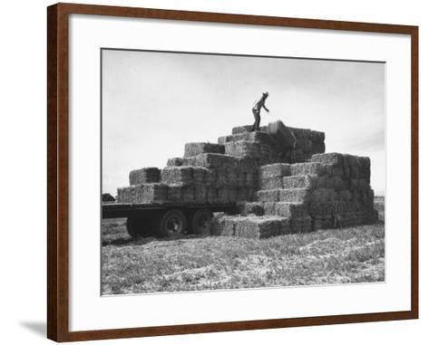 Baled Alfalfa in Large Stacks on Truck and on Ground in Imperial Valley-Hansel Mieth-Framed Art Print
