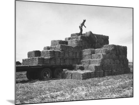 Baled Alfalfa in Large Stacks on Truck and on Ground in Imperial Valley-Hansel Mieth-Mounted Photographic Print