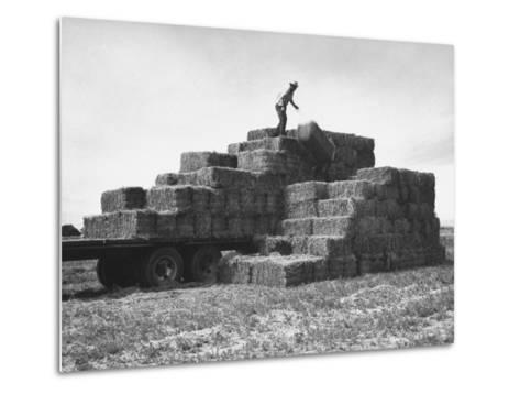 Baled Alfalfa in Large Stacks on Truck and on Ground in Imperial Valley-Hansel Mieth-Metal Print