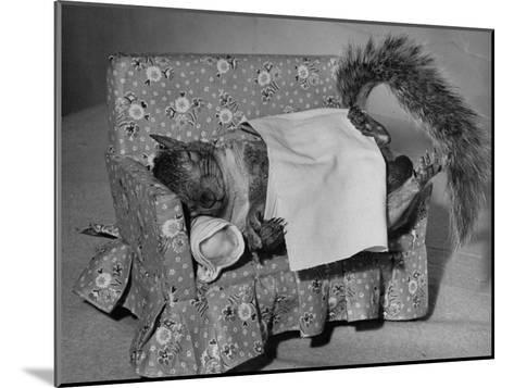 Tommy Tucker the Squirrel Sleeping on a Tiny Couch-Nina Leen-Mounted Photographic Print