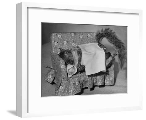 Tommy Tucker the Squirrel Sleeping on a Tiny Couch-Nina Leen-Framed Art Print