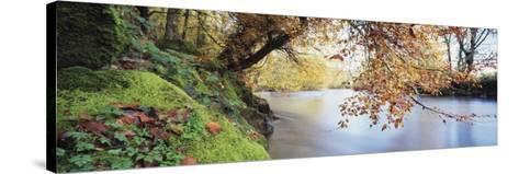 Trees Along a River, River Dart, Bickleigh, Mid Devon, Devon, England--Stretched Canvas Print