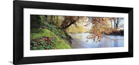 Trees Along a River, River Dart, Bickleigh, Mid Devon, Devon, England--Framed Art Print