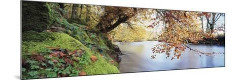 Trees Along a River, River Dart, Bickleigh, Mid Devon, Devon, England--Mounted Photographic Print