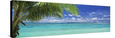 Palm Tree on the Beach, Huahine Island, Society Islands, French Polynesia--Stretched Canvas Print