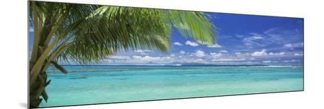 Palm Tree on the Beach, Huahine Island, Society Islands, French Polynesia--Mounted Photographic Print