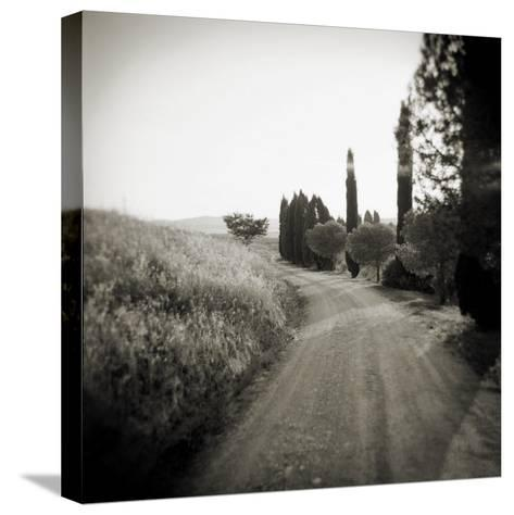 Country Lane with Cypress Trees in Early Morning Sunlight, San Quirico D'Orcia, Tuscany, Italy-Lee Frost-Stretched Canvas Print