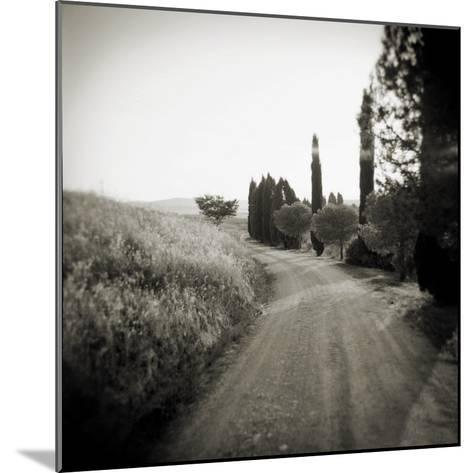 Country Lane with Cypress Trees in Early Morning Sunlight, San Quirico D'Orcia, Tuscany, Italy-Lee Frost-Mounted Photographic Print