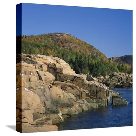 Gulls on Rocks Along the Coastline, in the Acadia National Park, Maine, New England, USA-Roy Rainford-Stretched Canvas Print