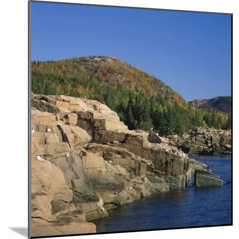 Gulls on Rocks Along the Coastline, in the Acadia National Park, Maine, New England, USA-Roy Rainford-Mounted Photographic Print